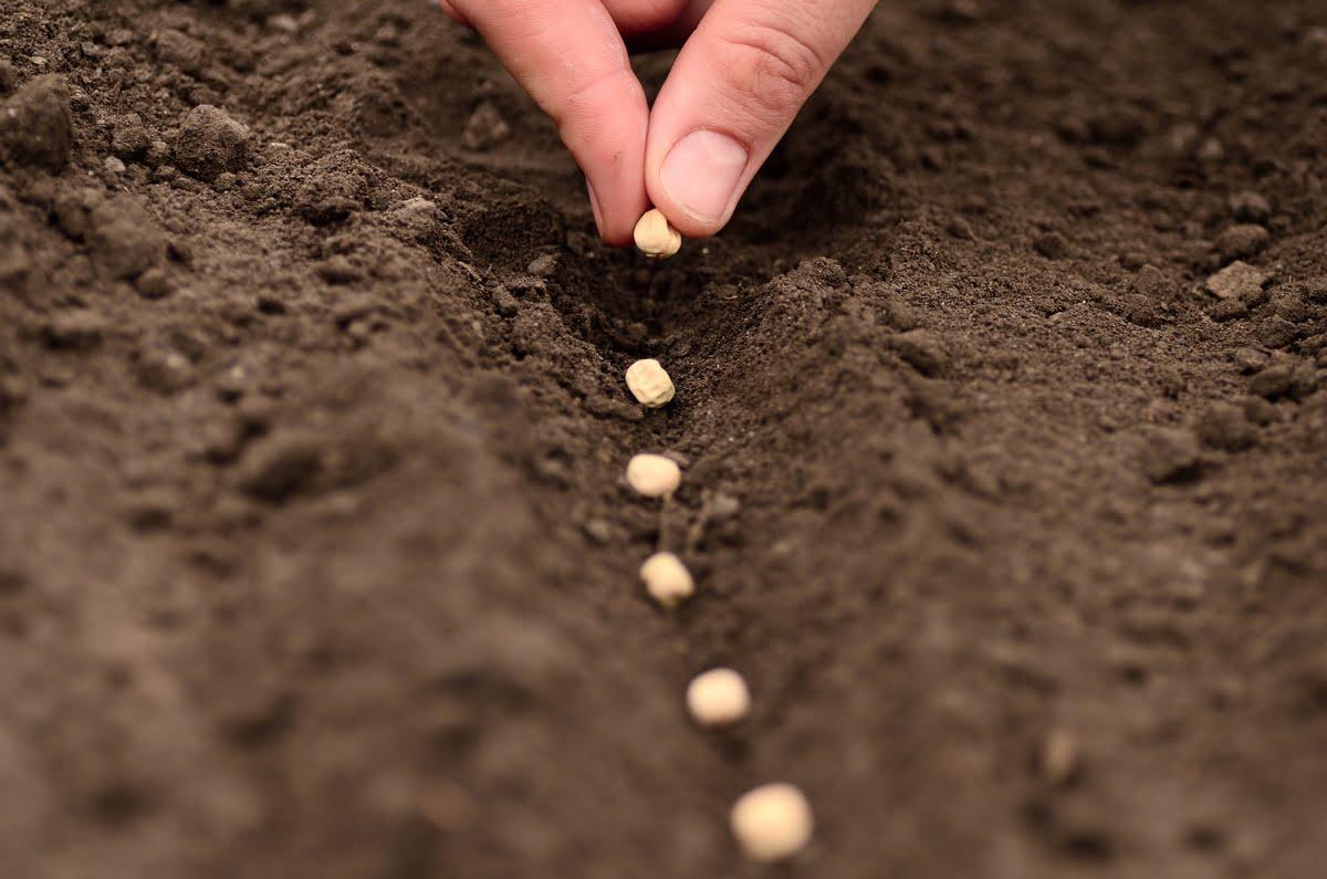 terriccio per semina