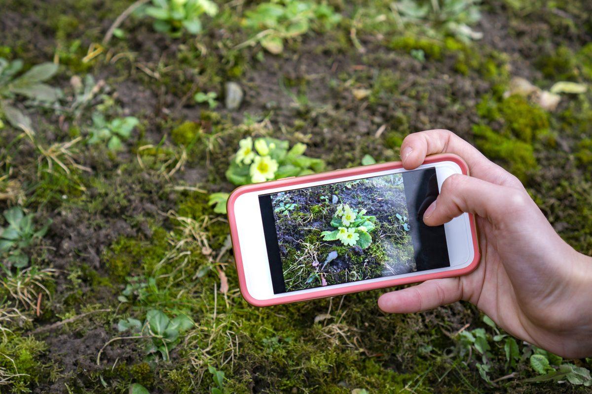 Applicazione per riconoscere le piante