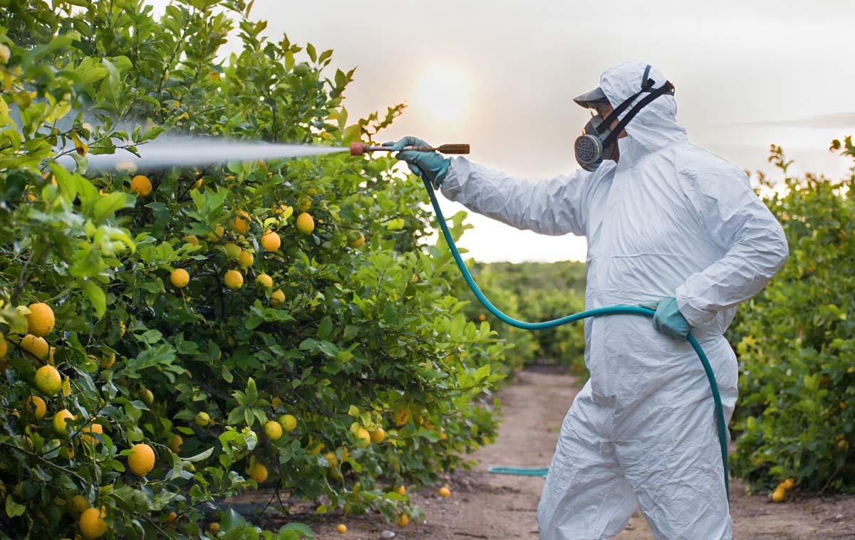 trattamenti delle piante da frutto fitofarmaci