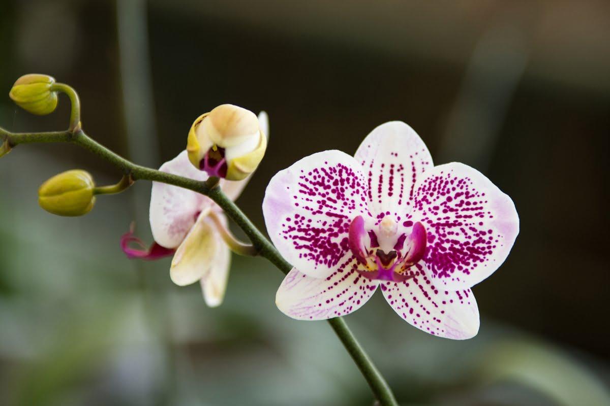 Immagini di orchidee