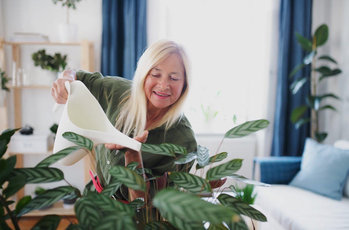 Irrigazione delle piante da appartamento